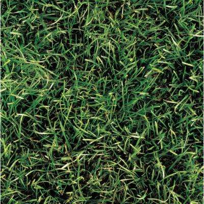 Grass Series 8 in. x 8 in. Standard Finish Ceramic Floor and Wall Tile (7.1 sq. ft. / case)