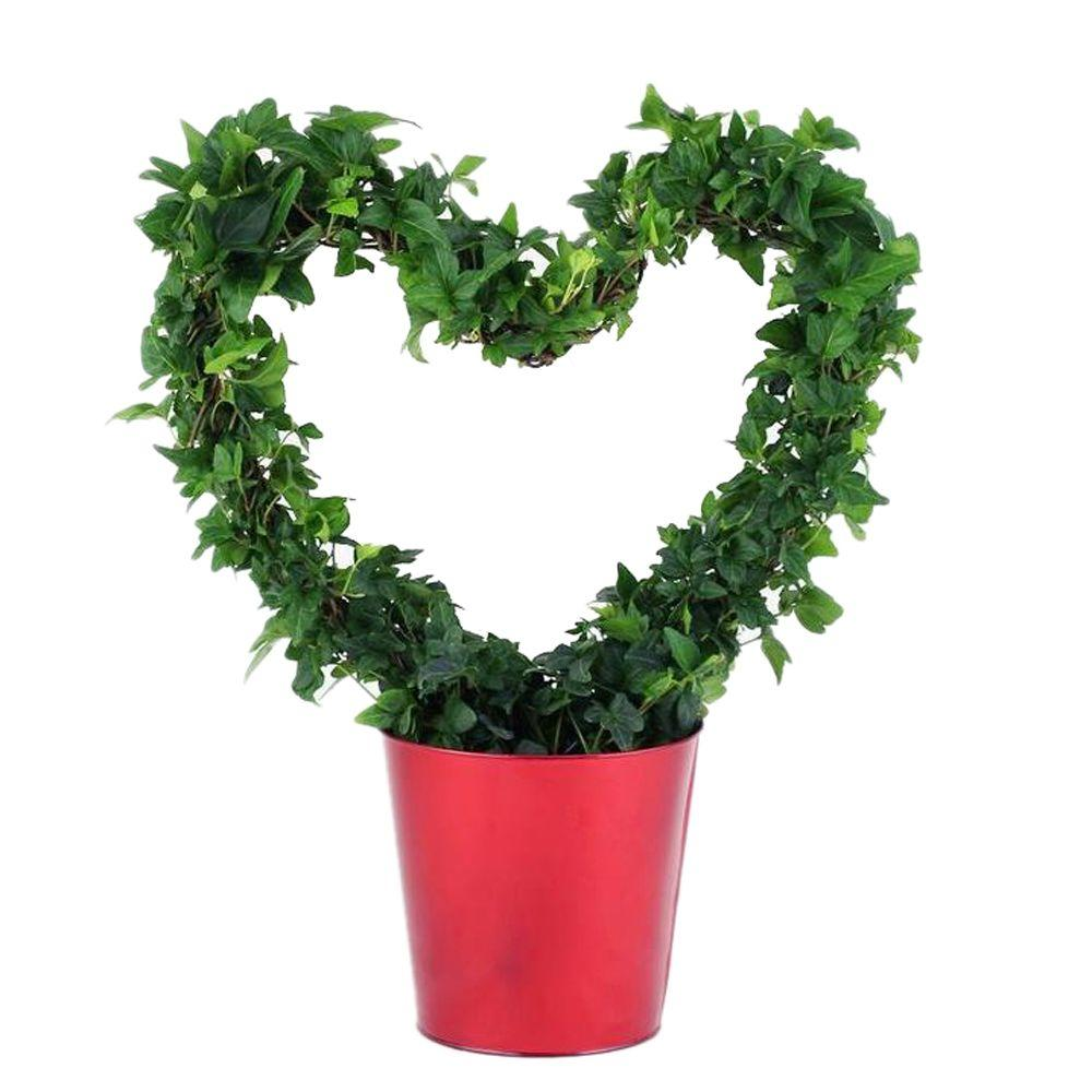 6.5 in. Ivy Classic Heart Topiary in Red Tin