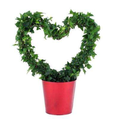 ivy classic heart topiary in red tin - Red Flowering House Plants