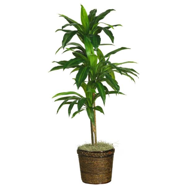 48 in. Dracaena with Basket Silk Plant (Real Touch)