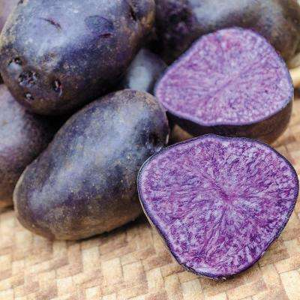 Seed Potato Purple Majesty (2 lb. Package)