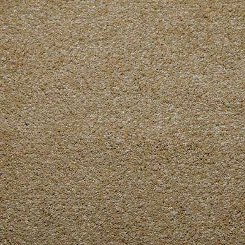 Carpet Sample - Sweet Dreams II - Color Camel Texture 8 in. x 8 in.