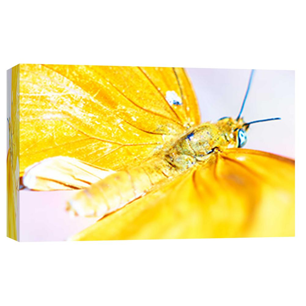 PTM Images 10.in x 12.in \'\'Butterfly AZ 5\'\' Printed Canvas Wall Art ...