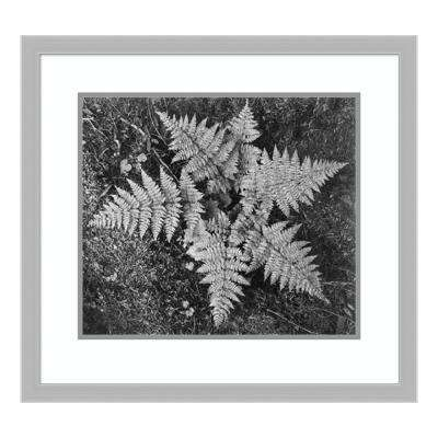 """""""Ferns, Glacier National Park, Montana - National Parks and Monuments, 1941"""" by Ansel Adams Framed Wall Art"""