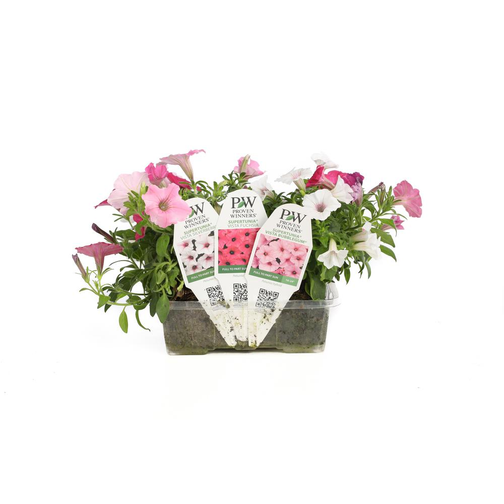Proven Winners Flowers Flowers Ideas For Review