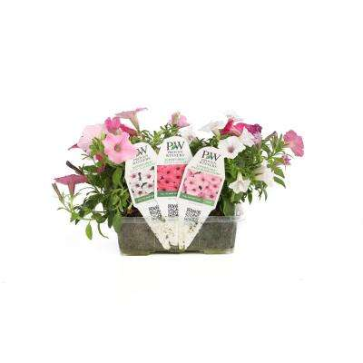 Above and Beyond Flower Pillow Combination, 5 Live Plants in 6 in. x 4 in. Tray