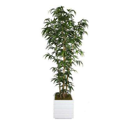 78 in. Tall Natural Bamboo Tree in 14 in. Fiberstone Planter
