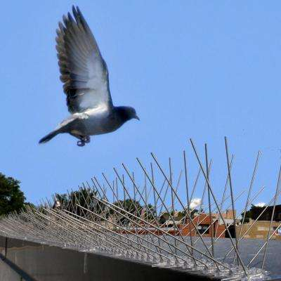 Original Bird-X Stainless Steel Bird Spikes 100 ft. Pigeons Starlings Blackbirds Seagulls 6 in. Coverage