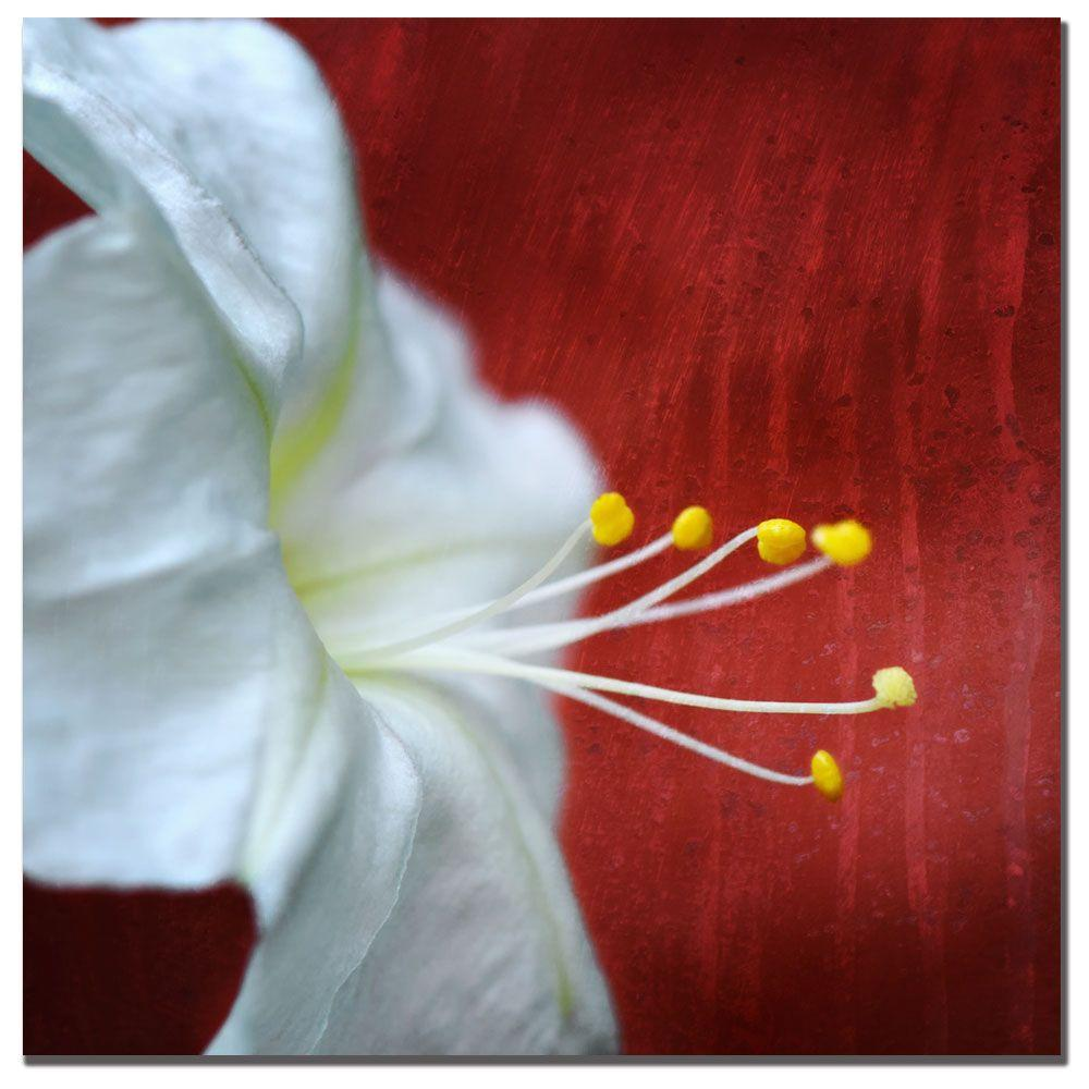 Trademark Fine Art 24 in. x 24 in. Flower for Zoe Canvas Art-DISCONTINUED