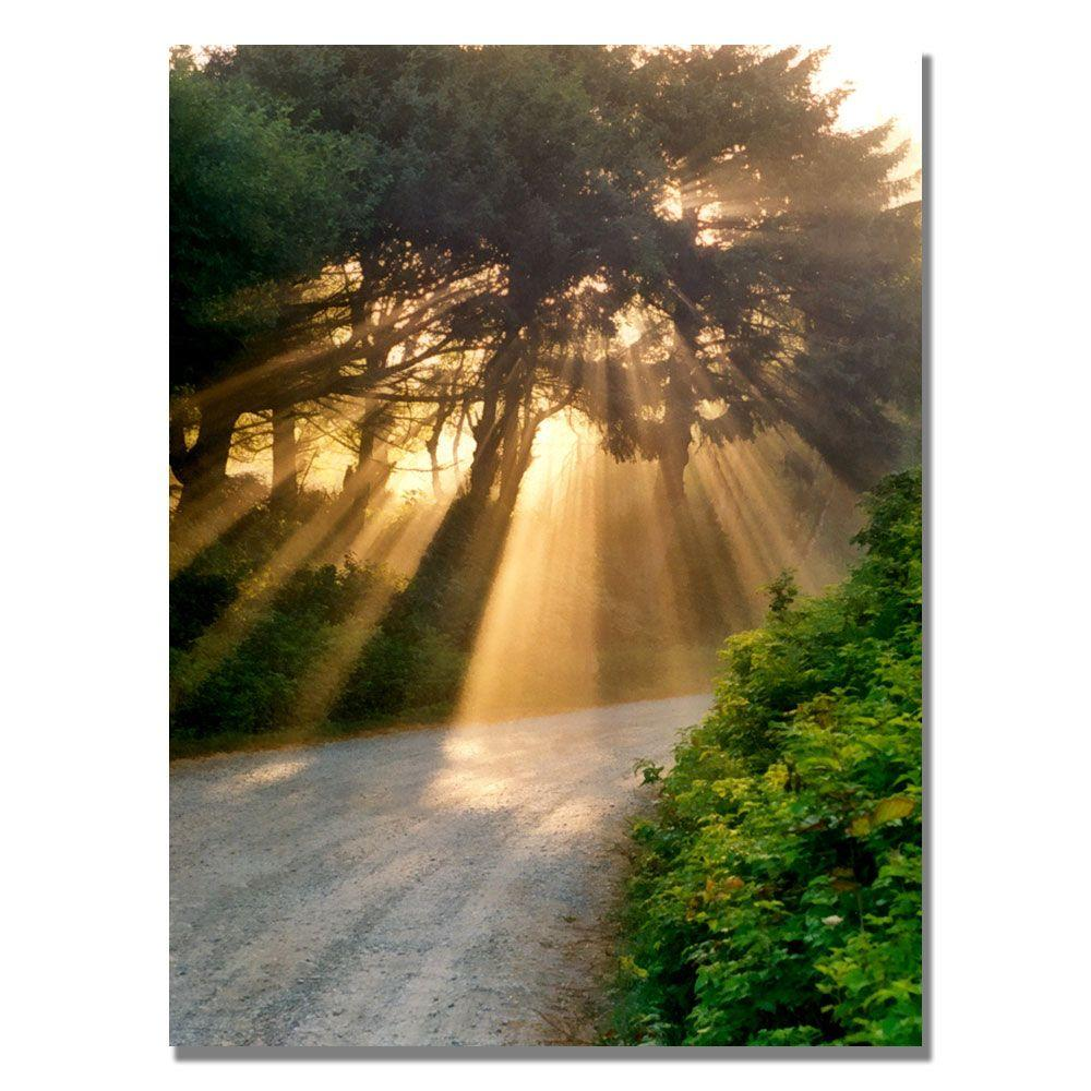 null 35 in. x 47 in. Sunlight Through Trees Canvas Art