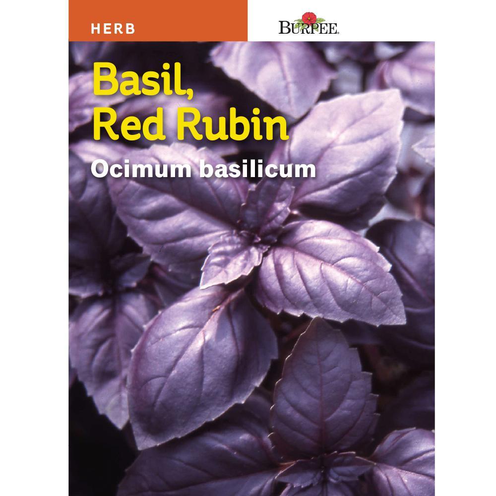 Basil Red Rubin Herb