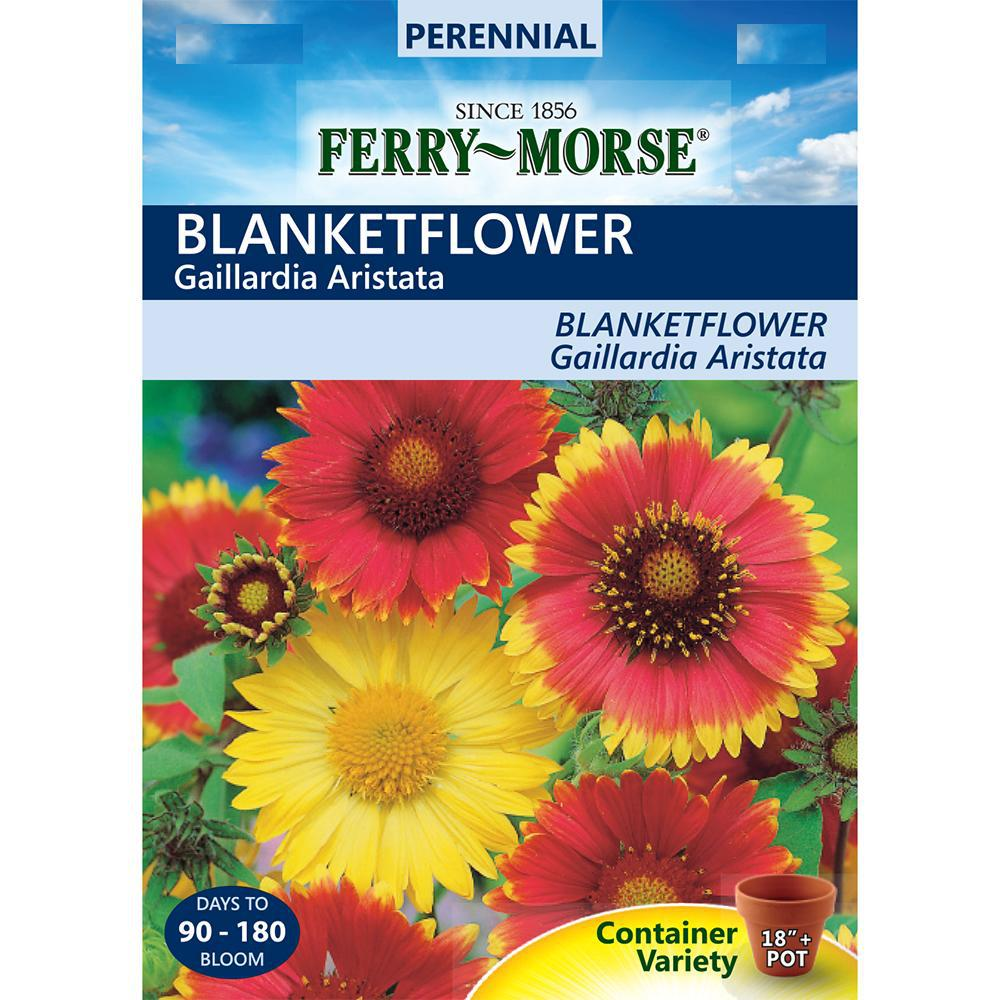 Ferry Morse Blanketflower Seed 4063 The Home Depot