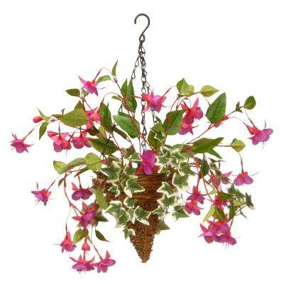 15 in. Fuchsia and Ivy Hanging Basket