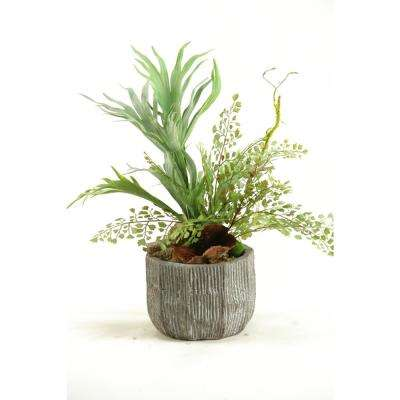 Indoor Mini Staghorn Fern and Flat Iron Fern in Concrete Bowl
