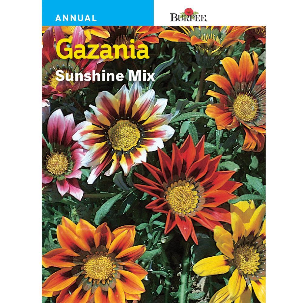 Gazania Sunshine Mix Seed