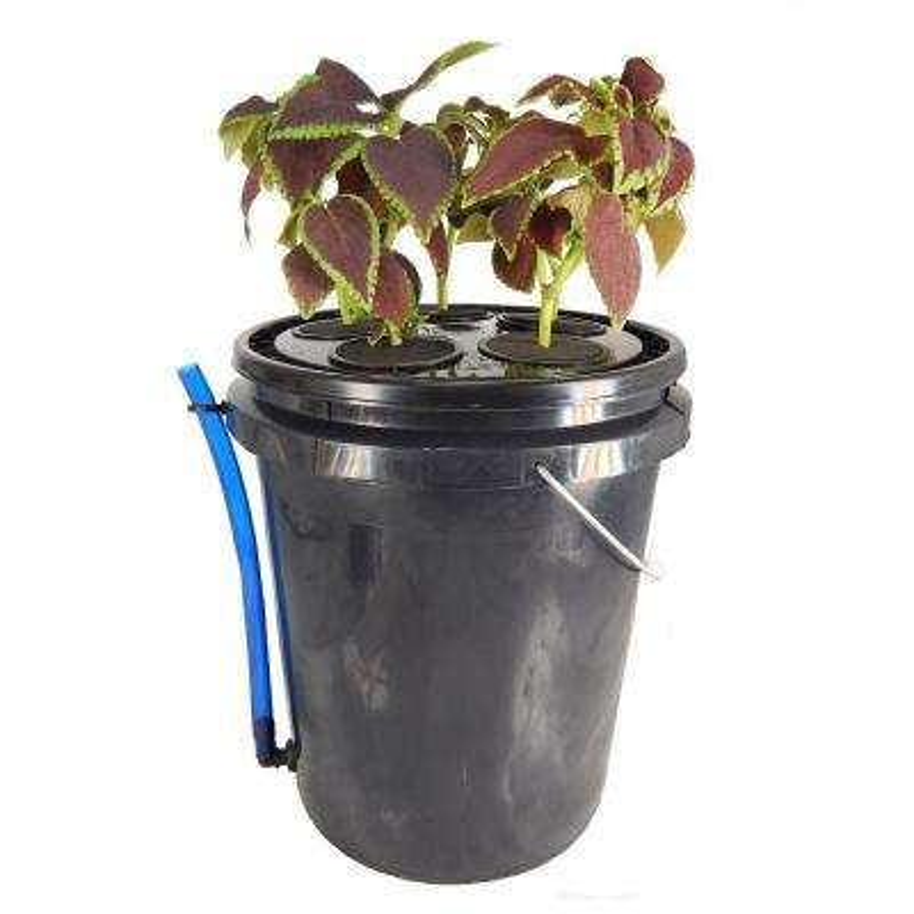 5-Site Aeroponic Vegetative Clone System