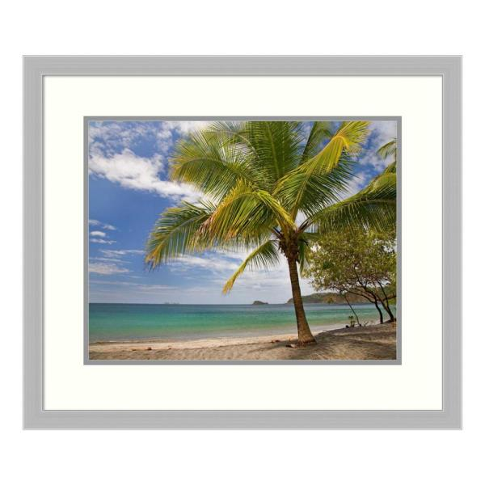 Amanti Art ''Palm trees line Penca Beach, Costa Rica'' by Tim