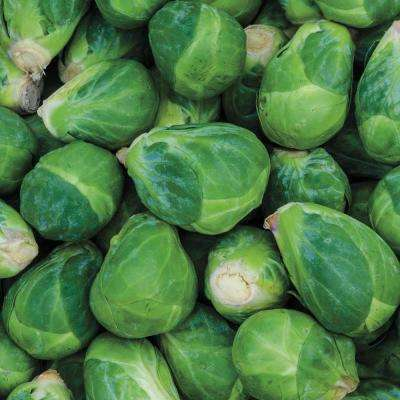 Brussel Sprouts Churchill Hybrid (30 Seed Packet)