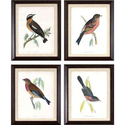 17.25 in. x 14.25 in. Antique Bird Studies Printed Framed Wall Art (Set of 4)