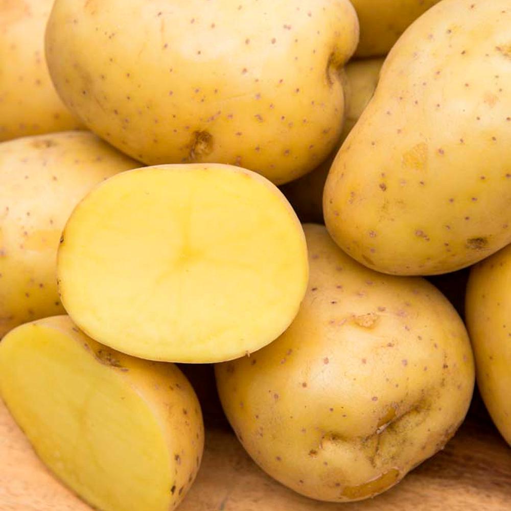 Seed Potato Yukon Gold (2 lb. Package)
