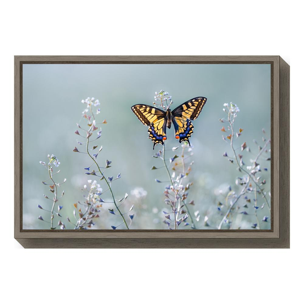 Amanti Art Swallowtail Beauty By Petar Sabol Framed Canvas Wall