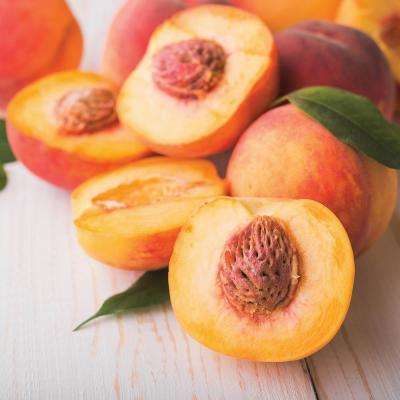 Peach Tree - Contender - 1 Root Stock