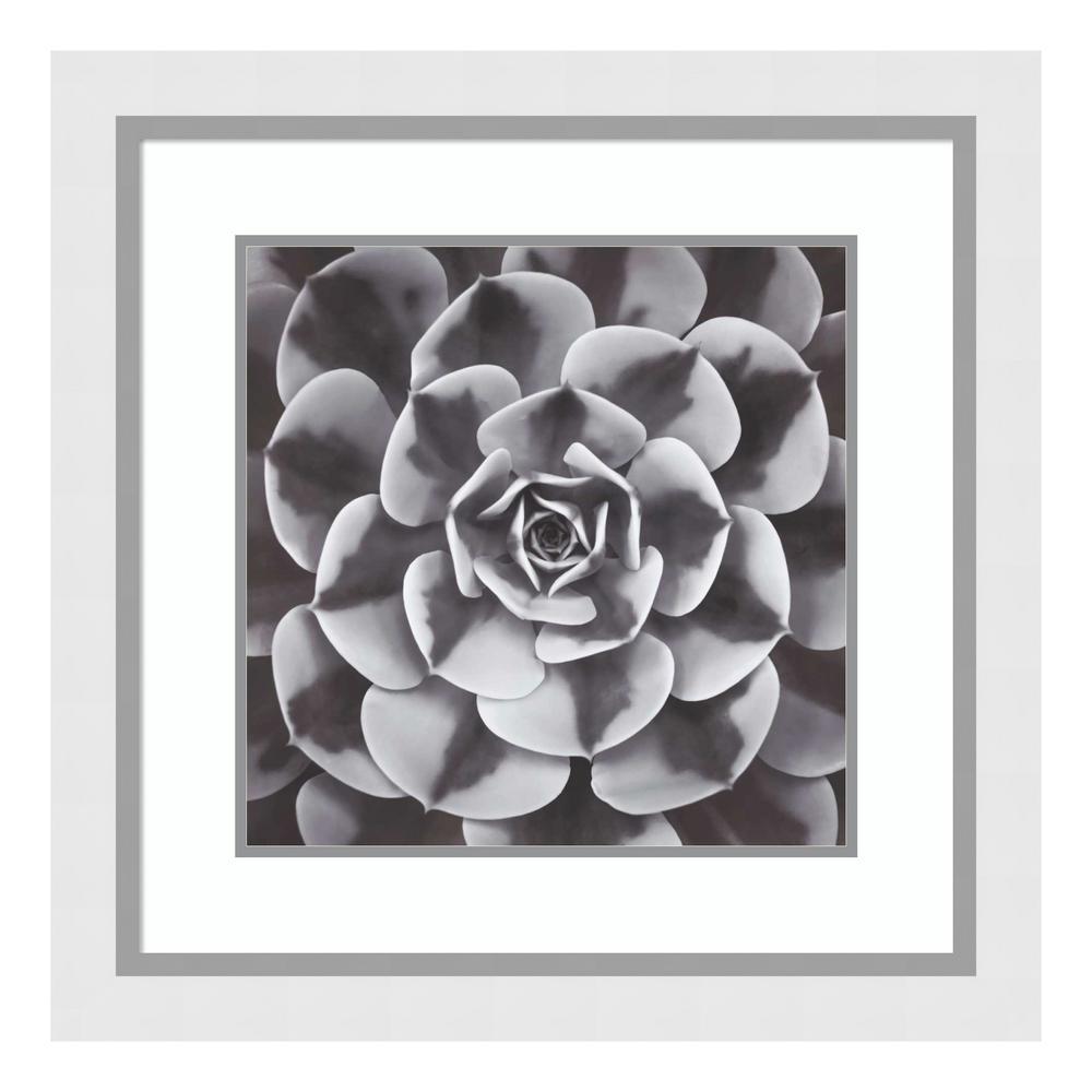"""""""Natural Designs III"""" by Assaf Frank Framed Wall Art"""