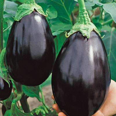 Eggplant Black Beauty Vegetable Seeds (30 Seed Packet)
