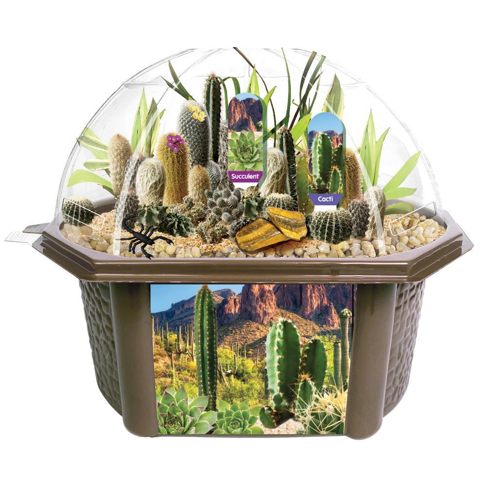Biosphere Terrariums Brown Desert Dome Indoor Garden Terrarium