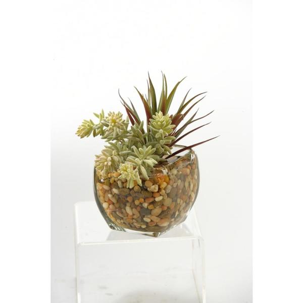 Indoor Yucca Succulent in Glass Cube