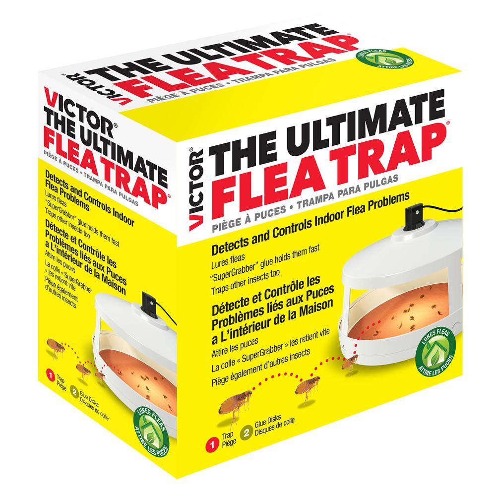 Ultimate Flea Trap