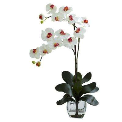 Double Phalaenopsis Orchid with Vase Arrangement in White