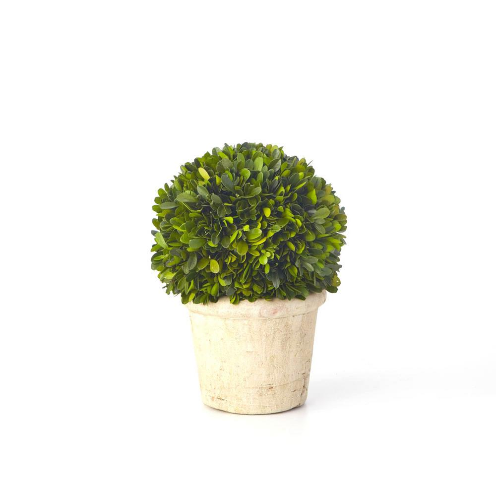 Boxwood Collection 12 In Preserved Sphere Topiary Epg13426 The Home Depot