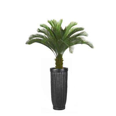 69 in. Tall Cycas Palm Tree in Planter