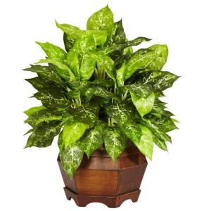 24 in. H Green Variegated Dieffenbachia with Large Hexagon Silk Plant