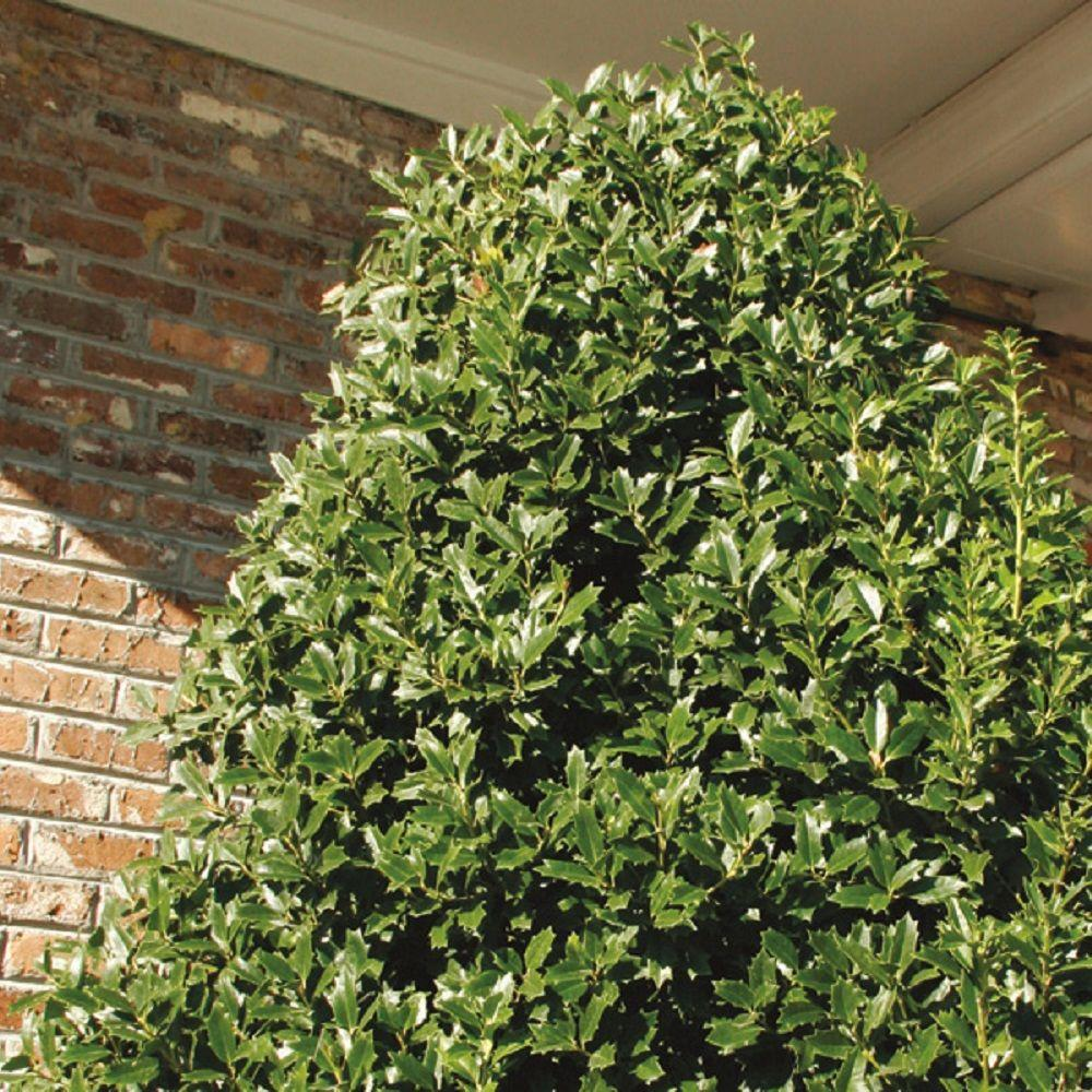 Boxwood Building Services