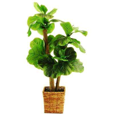 38 in. Fiddle Leaf Fig Tree in a Square Basket