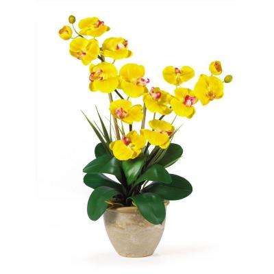 25 in. Double Stem Phalaenopsis Silk Orchid Flower Arrangement