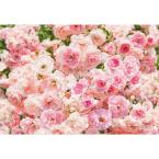 100 in. x 145 in. Rosa Wall Mural
