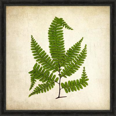 "18 in. x 18 in. ""Simple Fern III"" Framed Giclee Print Wall Art"