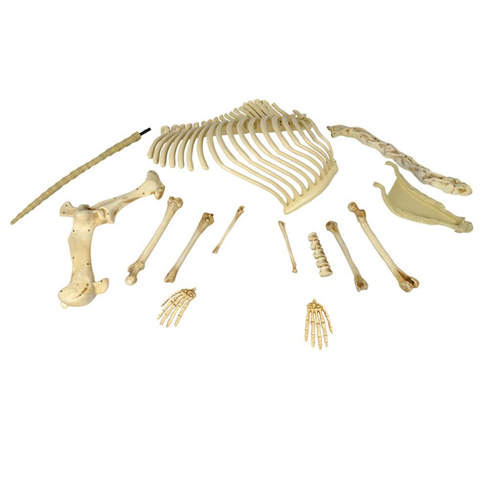 Big Bag of Bones