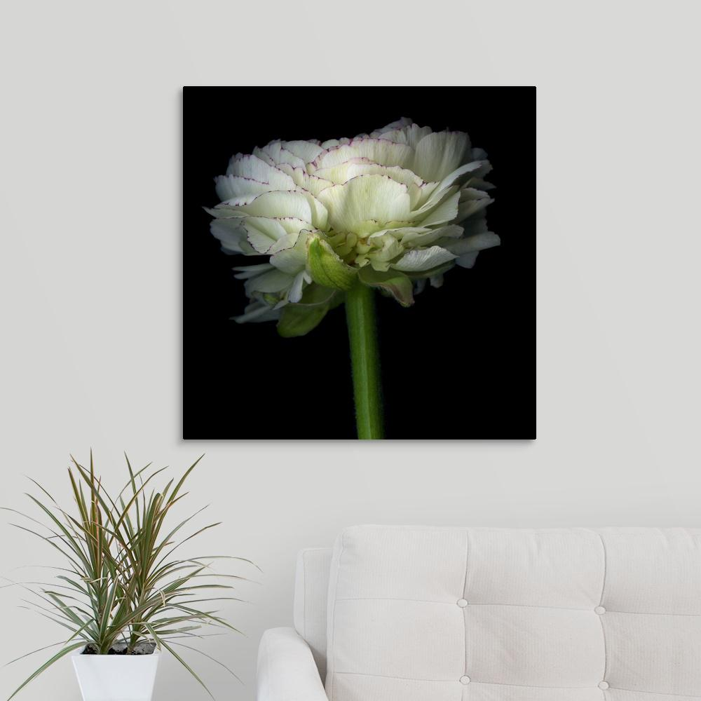 """Ranunculus White"" by Magda Indigo Canvas Wall Art"