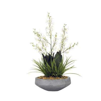 Indoor White Baby Dendrobium Orchids in Cement Bowl