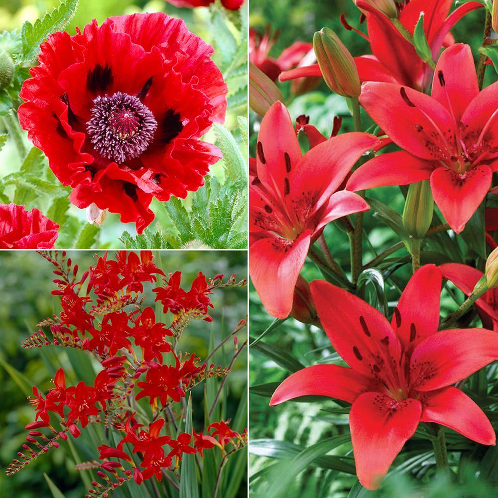 Van Zyverden Color Your Garden Red Collection Bulbs (37-Set)-83606 ...