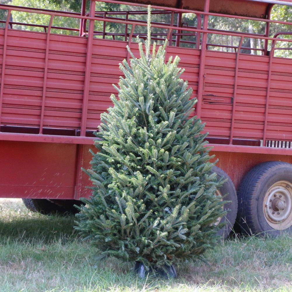 5 ft. Freshly Cut Noble Fir Real Christmas Tree