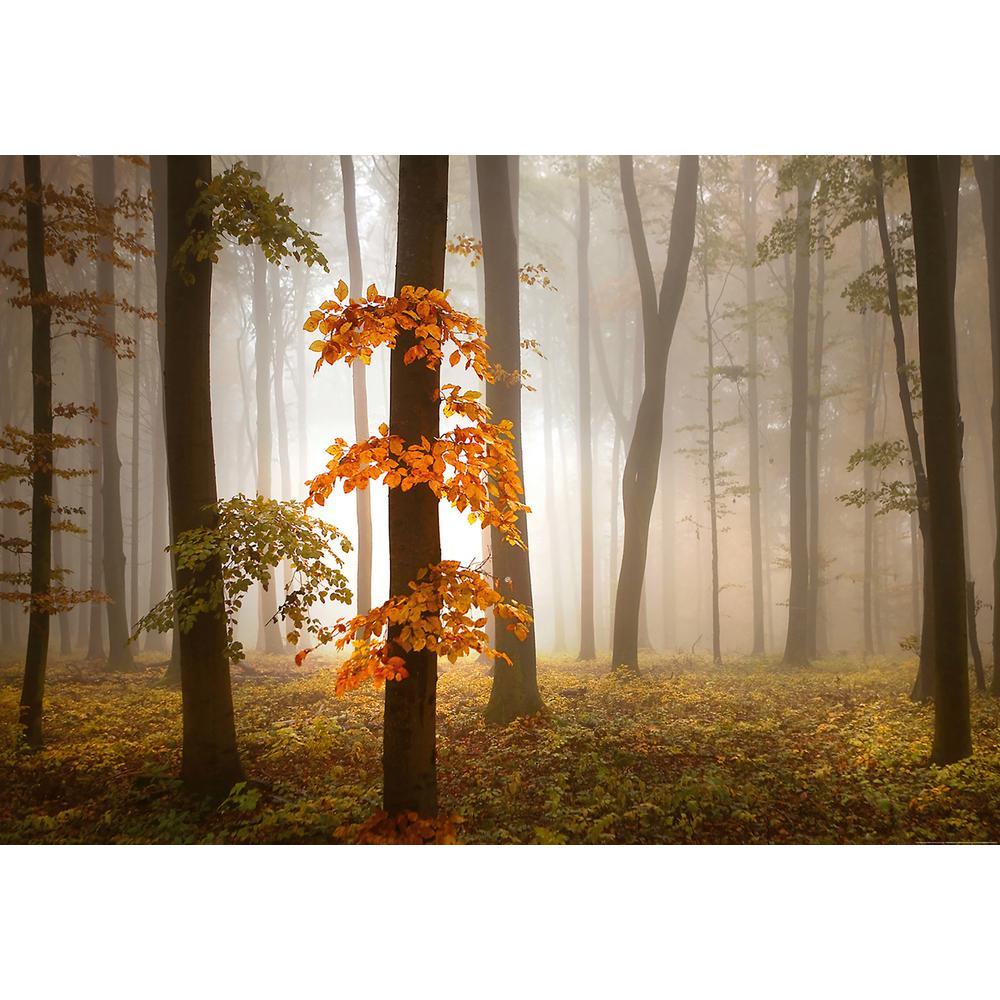 Ideal Decor Foggy Autumn Forest Wall Mural WG5153-4P-1