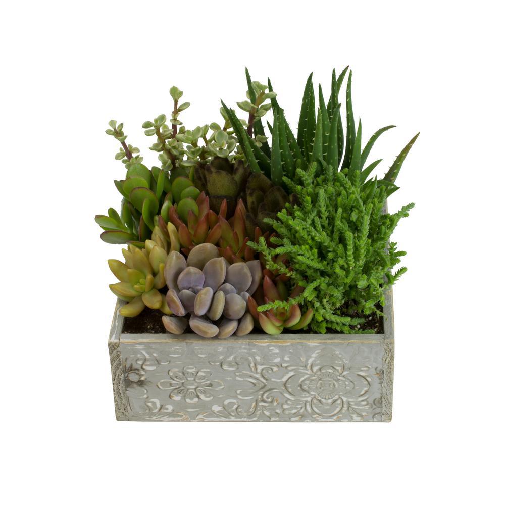 7.5 in. Embossed Wood Gray Wash Cactus & Succulent Garden Plant