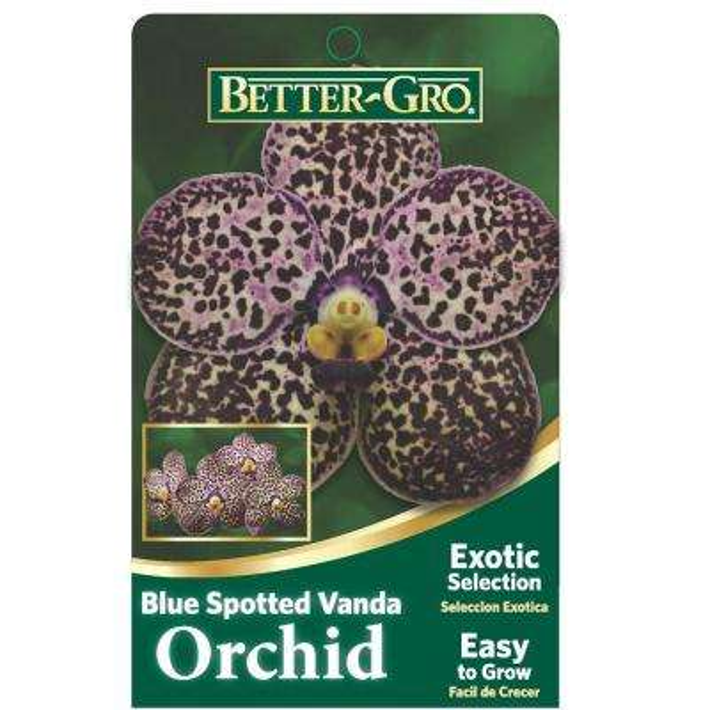 Blue Spotted Vanda Package Orchids 4 in. plastic basket