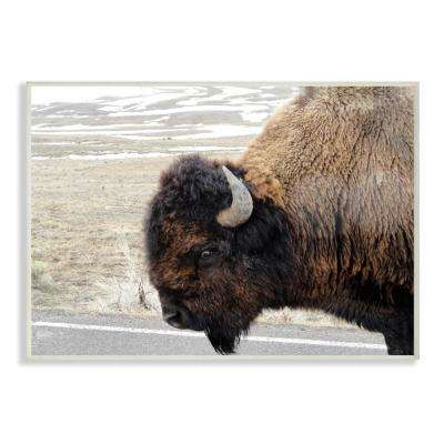 """10 in. x 15 in. """"Beautiful Buffalo Photography"""" by In House Art Printed Wood Wall Art"""