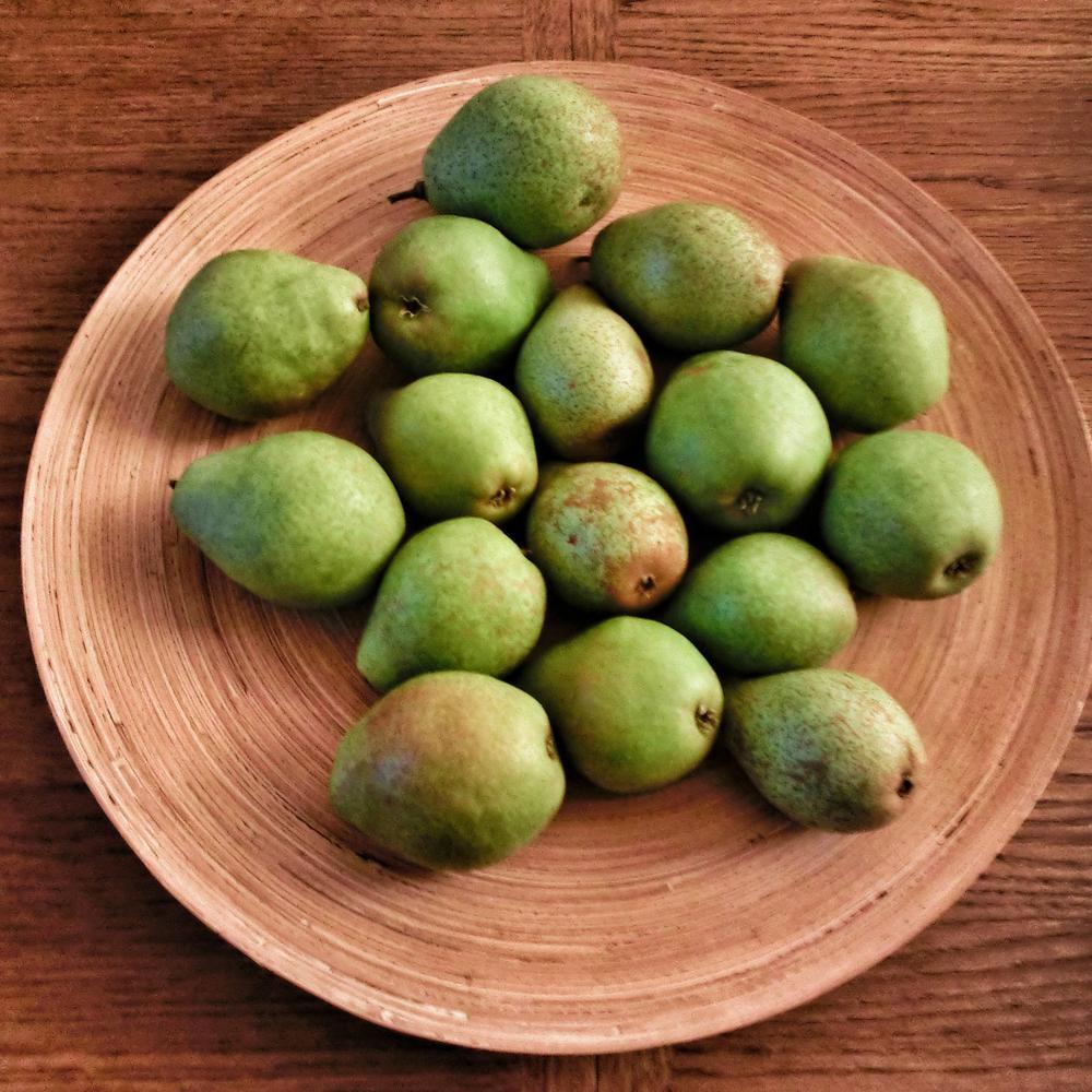 Flordahome Pear Tree